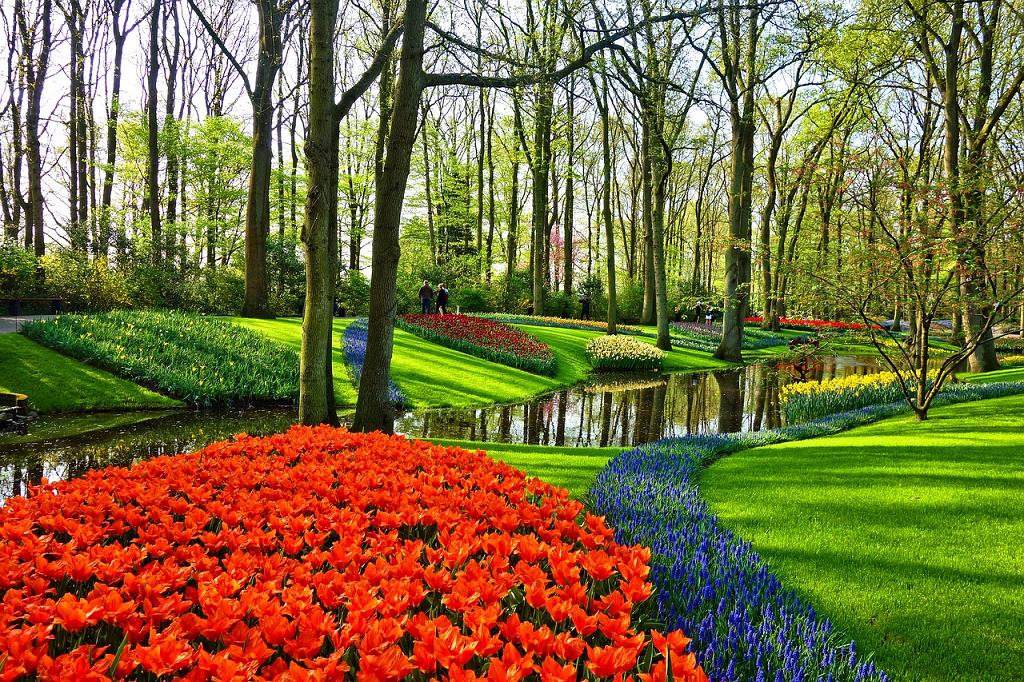 gradini cu flori olandeze