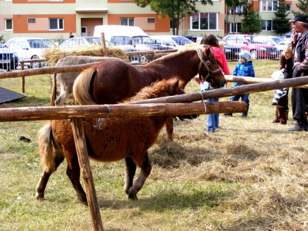 petrecere cu ponei miercurea ciuc