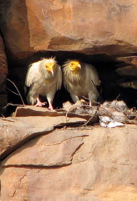 Vulturii albi, Foto: webecoist.momtastic.com