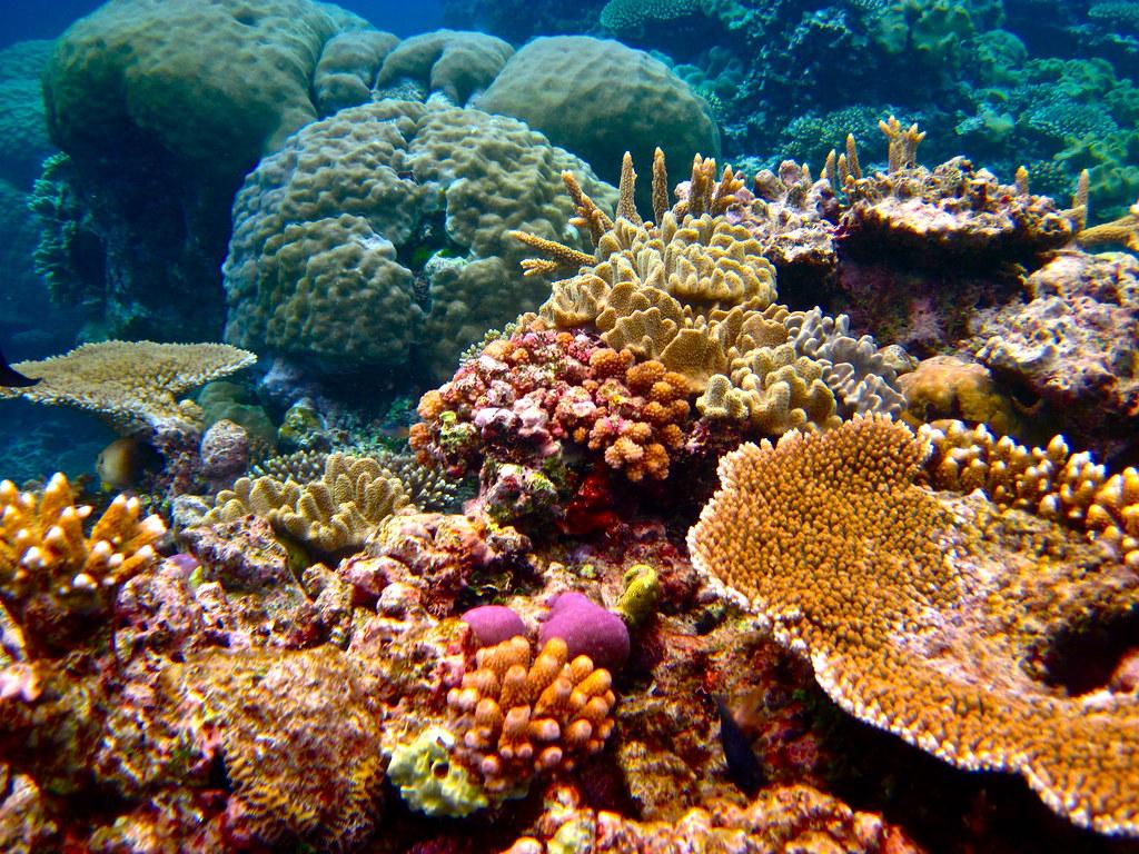 Marea Barieră de Corali1
