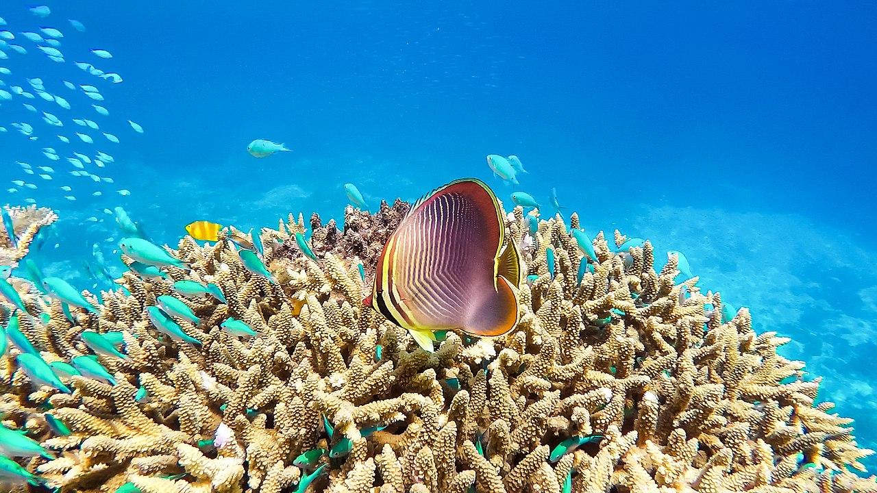 Marea Barieră de Corali11