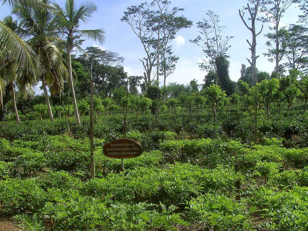 Ahangama plantatie
