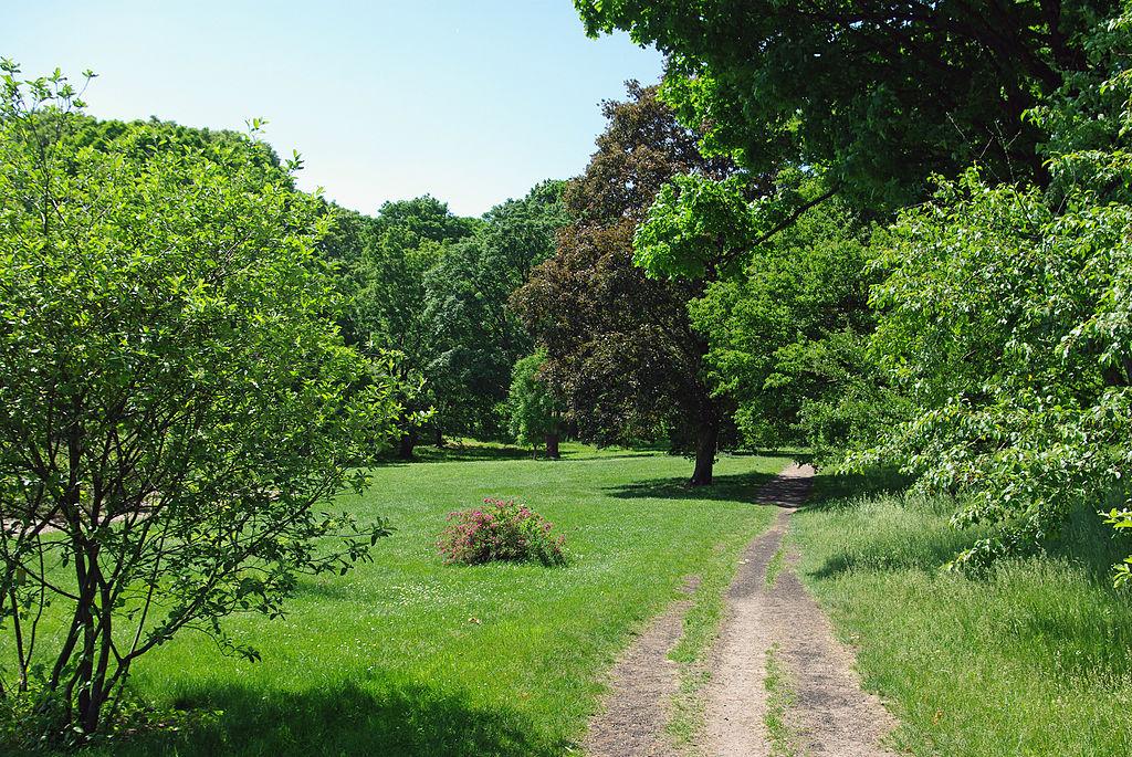Arnold Arboretum1