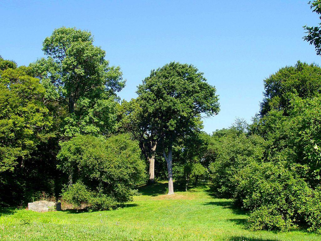 Arnold Arboretum11