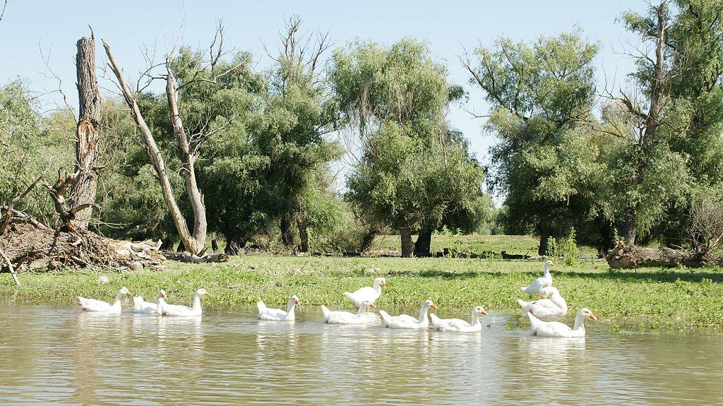 Delta Dunarii6
