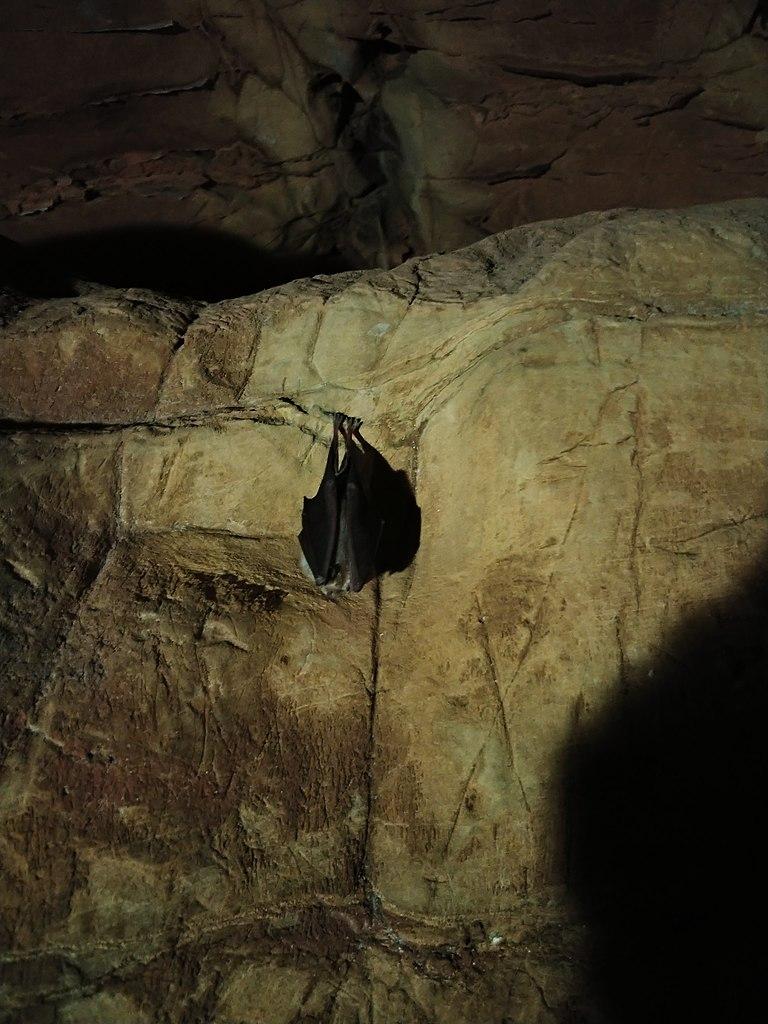 Echo Caves1