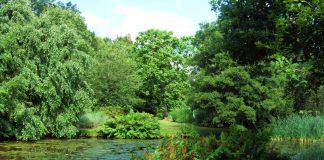 Grădina Savill