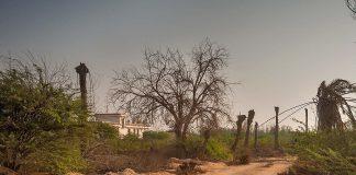 Gradini din Al Shamal