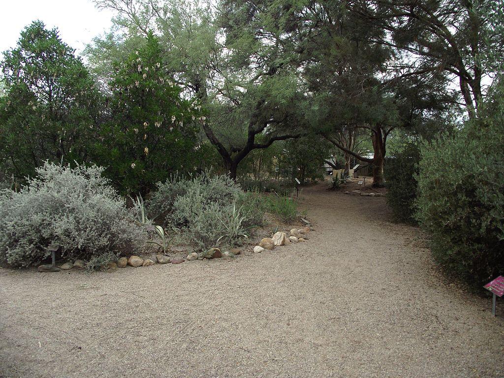 Gradinile Botanice Tucson