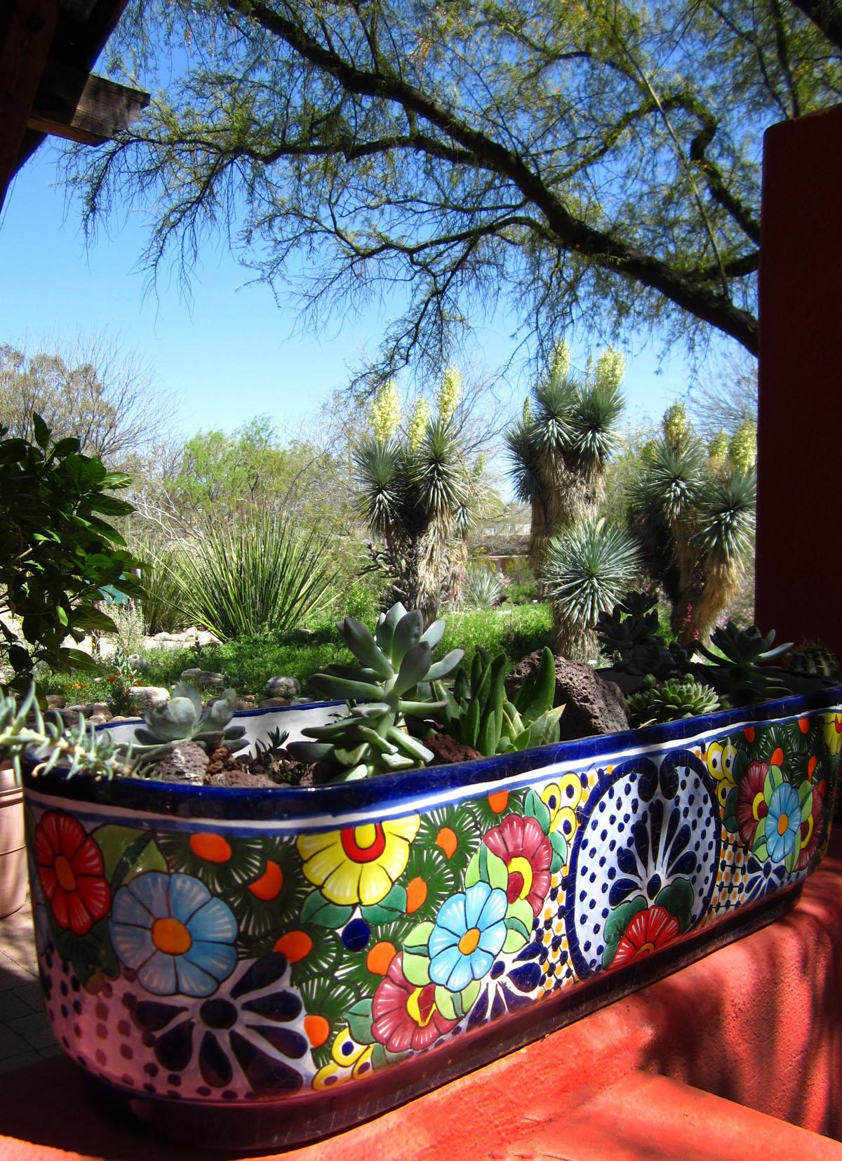 Gradinile Botanice Tucson1