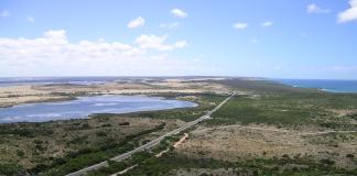 Kangaroo view