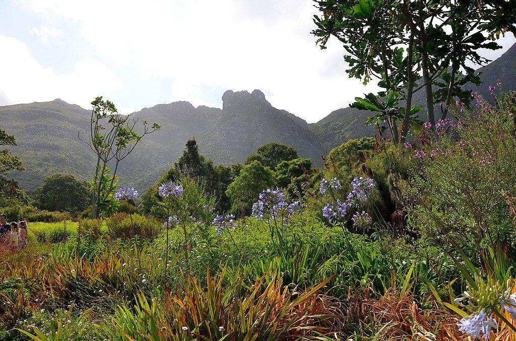 Kirstenbosch Botanical Gardens11
