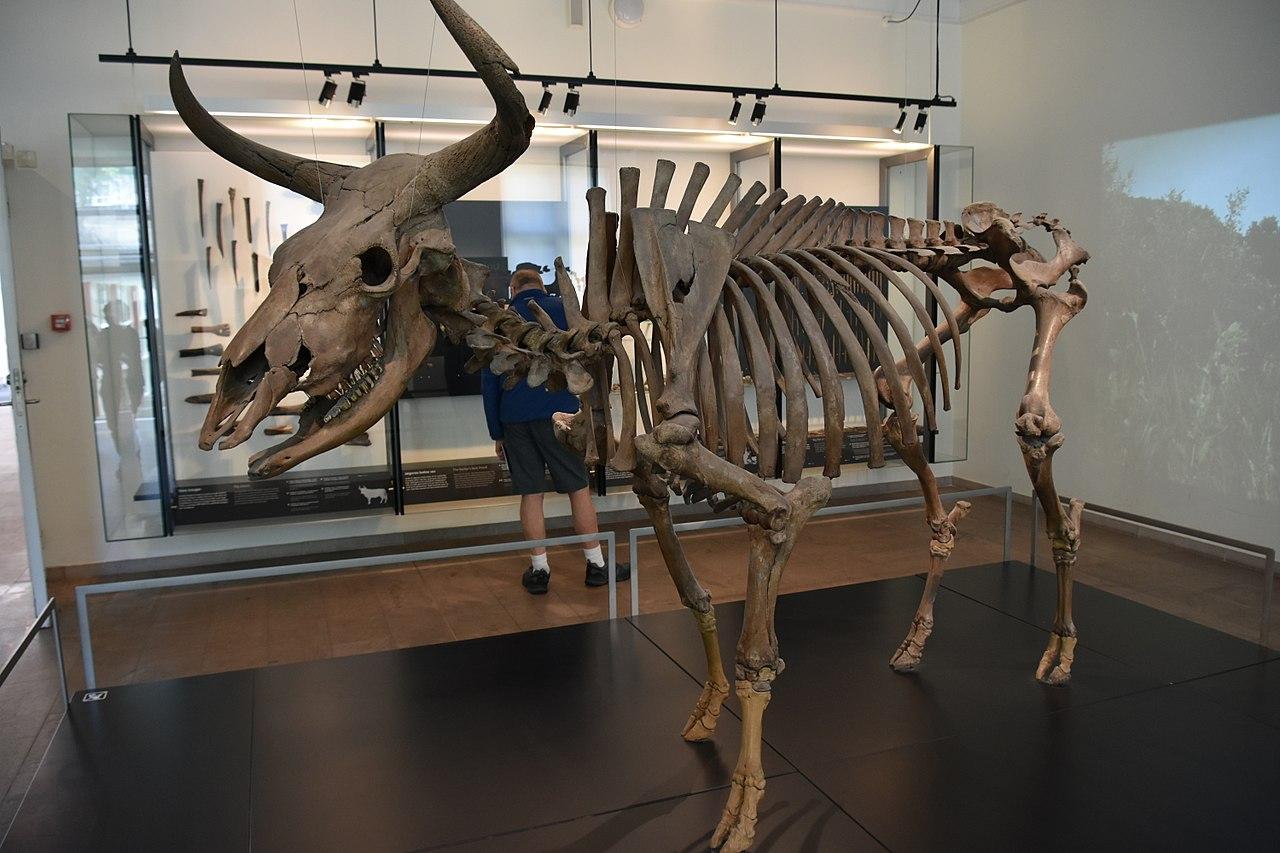 Muzeul National din Copenhaga11111