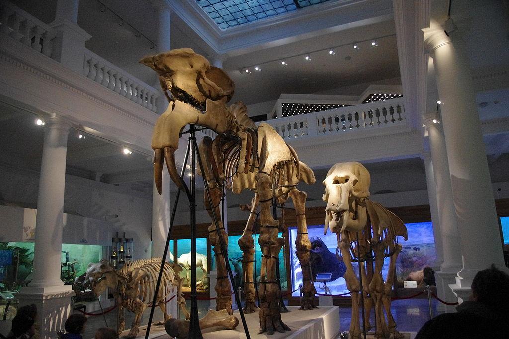 Muzeul de Istorie Naturală Grigore Antipa111