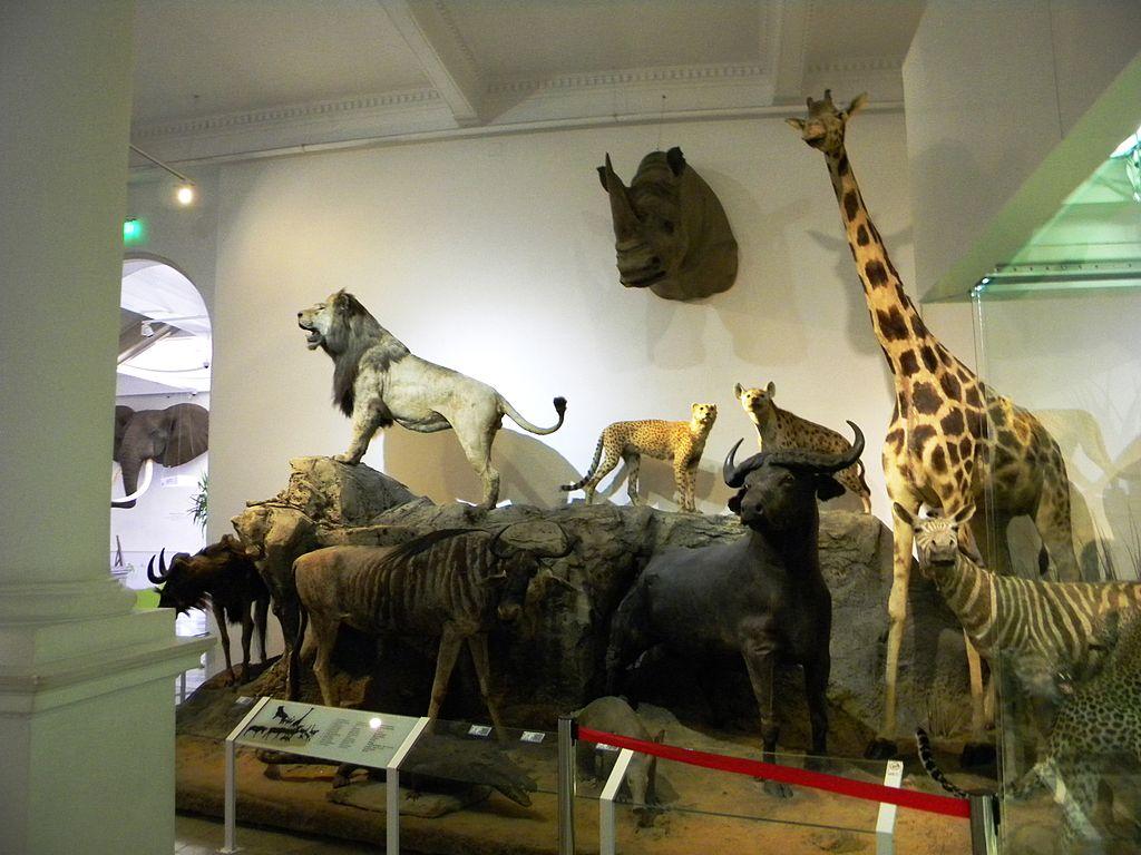 Muzeul de Istorie Naturală Grigore Antipa2