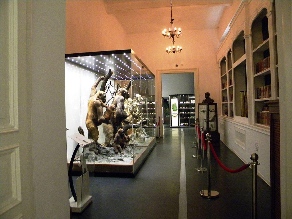 Muzeul de Istorie Naturală Grigore Antipa22