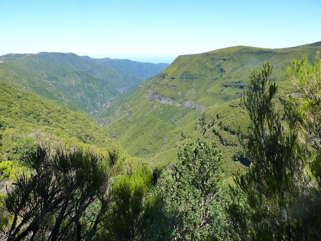 Padurile de laur de pe Madeira