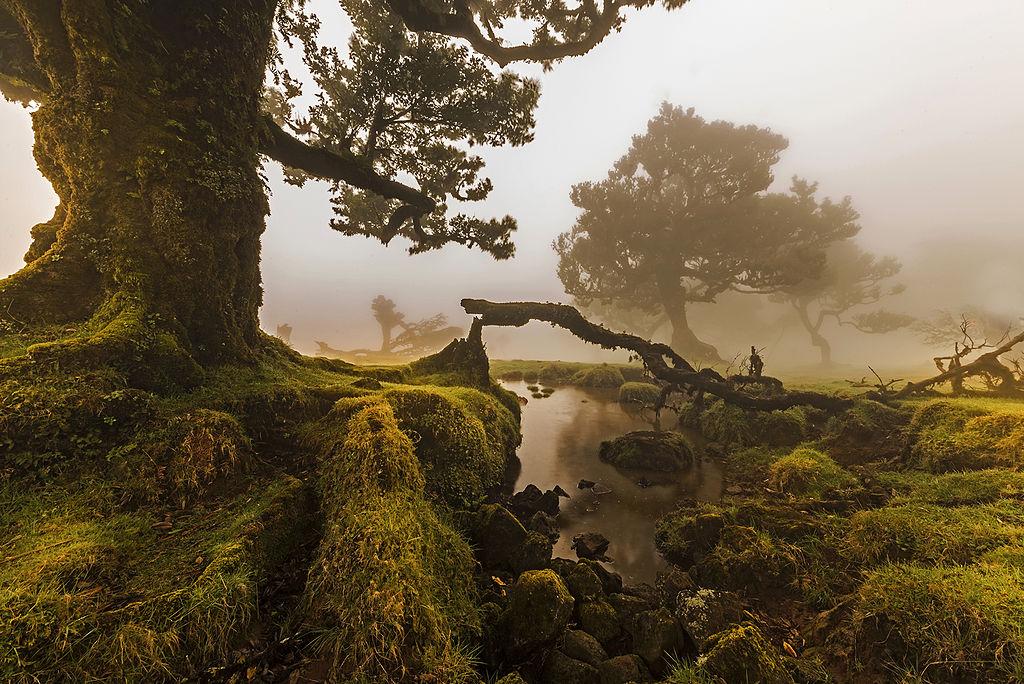 Padurile de laur de pe Madeira11