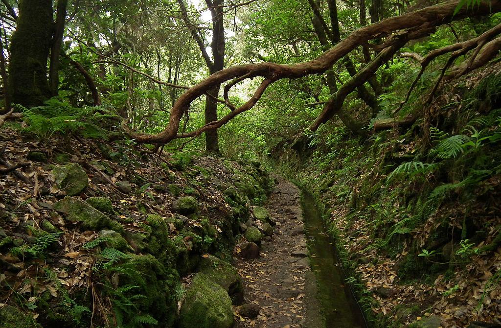 Padurile de laur de pe Madeira111