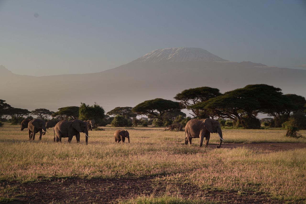 Parcul Naţional Amboseli