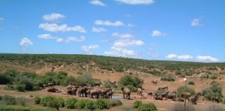 Parcul National Addo pentru elefanti