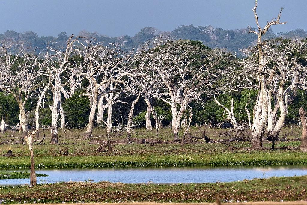 Parcul National Yala11