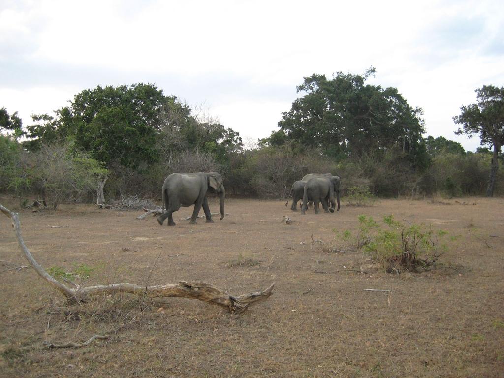 Parcul National Yala111