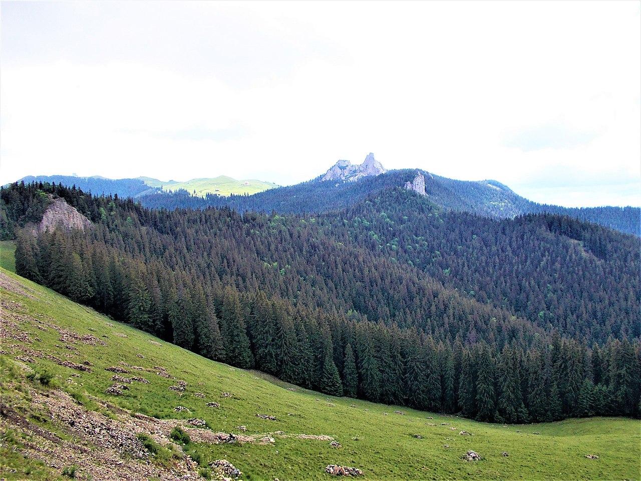 Rezervația naturală Pietrele Doamnei