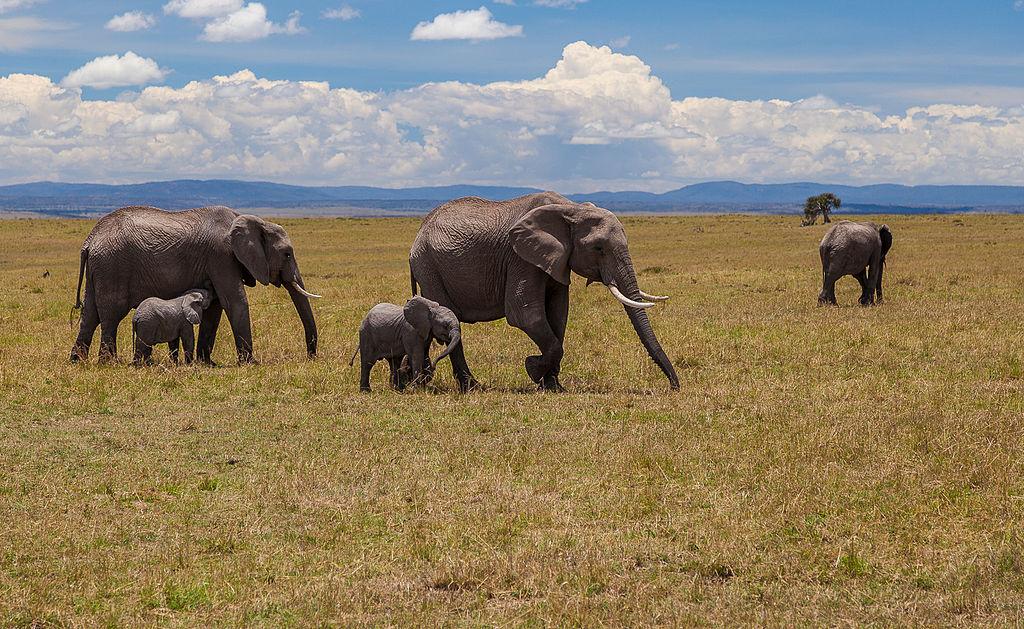 Rezervatia Nationala Masai Mara11