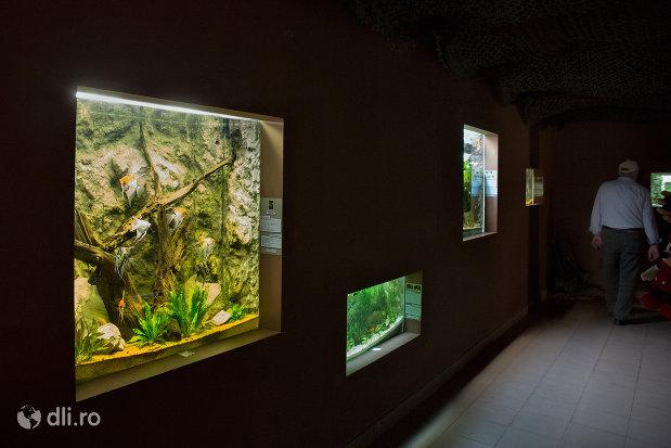 acvarii-din-gradina-zoologica-din-oradea-judetul-bihor.jpg