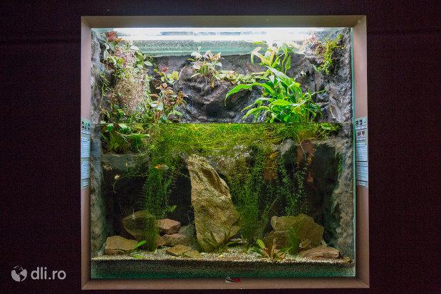 acvariu-cu-pesti-gradina-zoologica-din-oradea-judetul-bihor.jpg