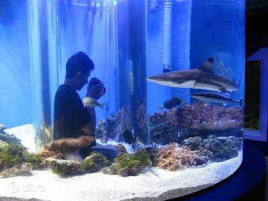 acvariul-din-tulcea.jpg