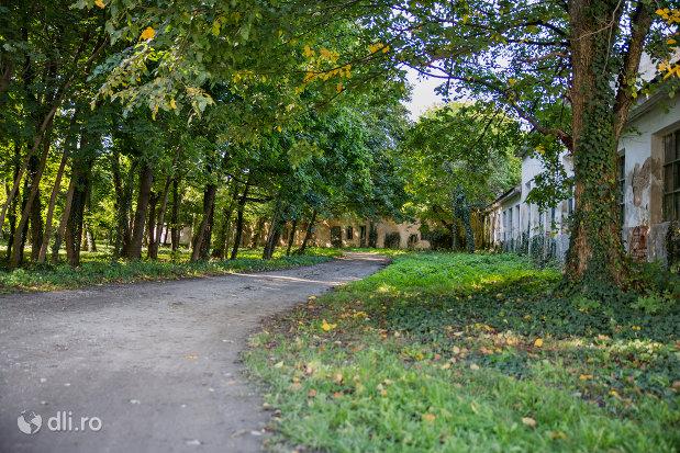 alee-castelul-vecsey-din-livada-judetul-satu-mare.jpg