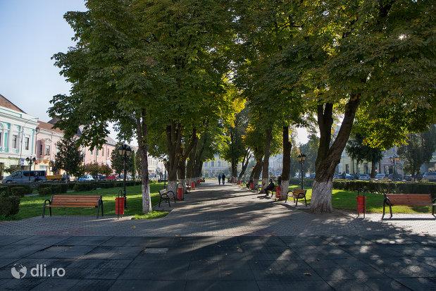 alee-cu-copaci-din-orasul-sighetu-marmatiei-judetul-maramures.jpg