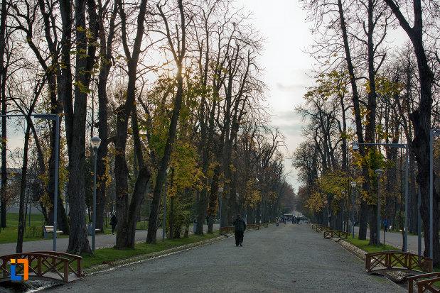 alee-cu-copaci-parcul-central-simion-barnitiu-din-cluj-napoca-judetul-cluj.jpg