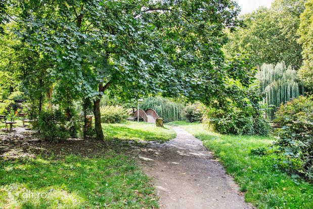 alee-de-plimbare-printr-copaci-in-gradina-romei-din-satu-mare.jpg