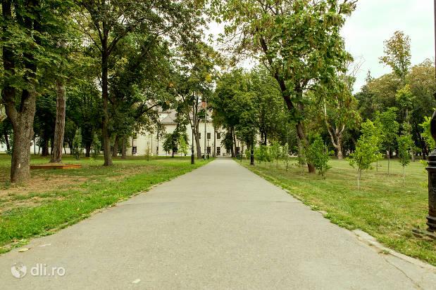 alee-din-parc-spre-castelul-karolyi-din-carei.jpg