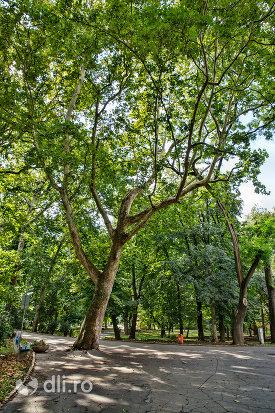alee-pentru-plimbare-in-gradina-romei-din-satu-mare.jpg