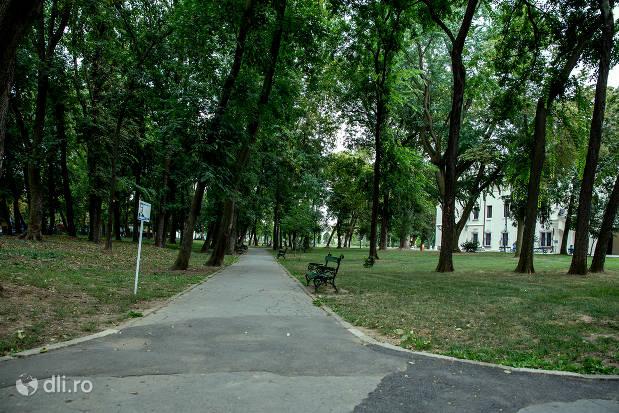 alee-printre-copaci-din-parcul-dendrologic-carei.jpg
