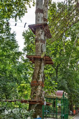 amenajere-in-copaci-in-gradina-romei-din-satu-mare.jpg