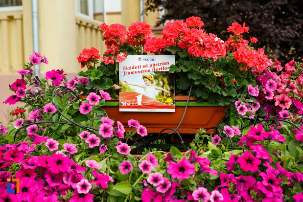 aranjament-floral-din-orasul-panciu-judetul-vrancea.jpg