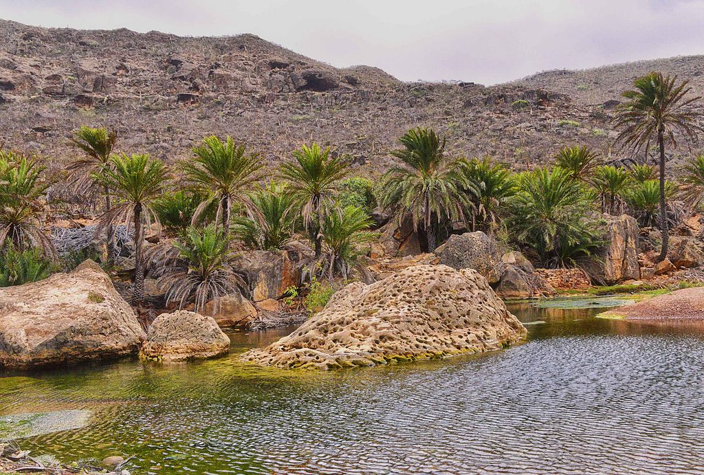 arhipelagul Socotra
