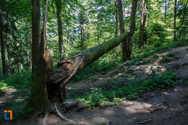 bariera-naturala-de-pe-traseul-spre-cascada-urlatoarea-din-busteni-judetul-prahova.jpg