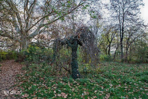copac-altoit-din-parcul-dendrologic-din-valea-lui-mihai-judetul-bihor.jpg