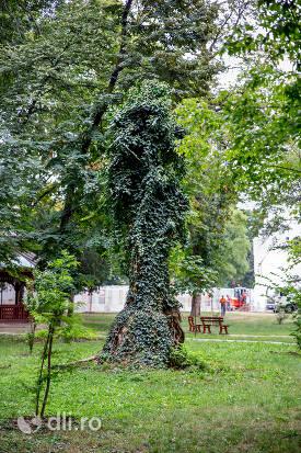 copac-interesant-din-parcul-dendrologic-carei.jpg