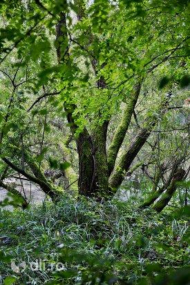 copac-langa-lacul-din-padurea-noroieni-judetul-satu-mare.jpg