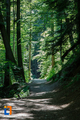 copacii-de-pe-traseul-spre-cascada-urlatoarea-din-busteni-judetul-prahova.jpg