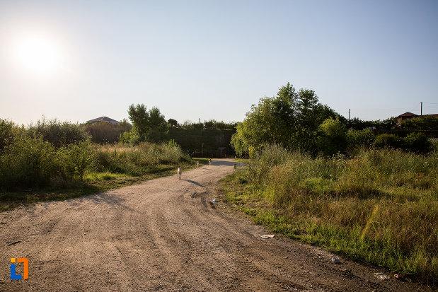 drum-spre-ruinele-conacului-manu-1827-din-budesti-judetul-calarasi.jpg