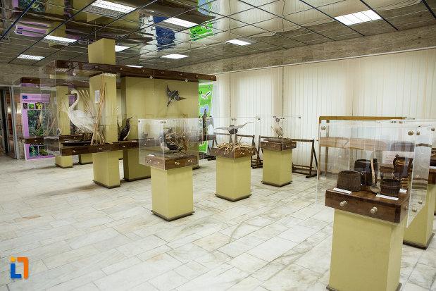 expozitie-de-pasari-de-la-muzeul-regiunii-portilor-de-fier-din-drobeta-turnu-severin-judetul-mehedinti.jpg