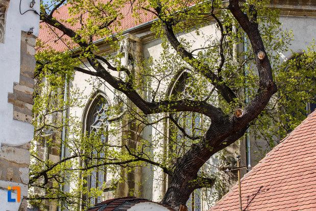 ferestre-de-la-biserica-evanghelica-din-sebes-judetul-alba.jpg